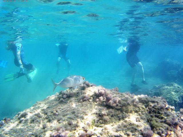 El proyecto ´Camonmar3´ pone de relieve la biodiversidad marina de la Bahía de Mazarrón - 1, Foto 1