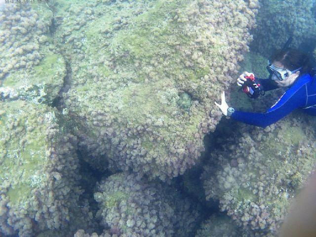El proyecto ´Camonmar3´ pone de relieve la biodiversidad marina de la Bahía de Mazarrón - 3, Foto 3