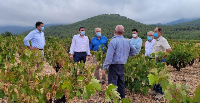 La Comunidad apoya al sector vitivinícola a través de ayudas y líneas de investigación que impulsen la modernización y competitividad - 1, Foto 1