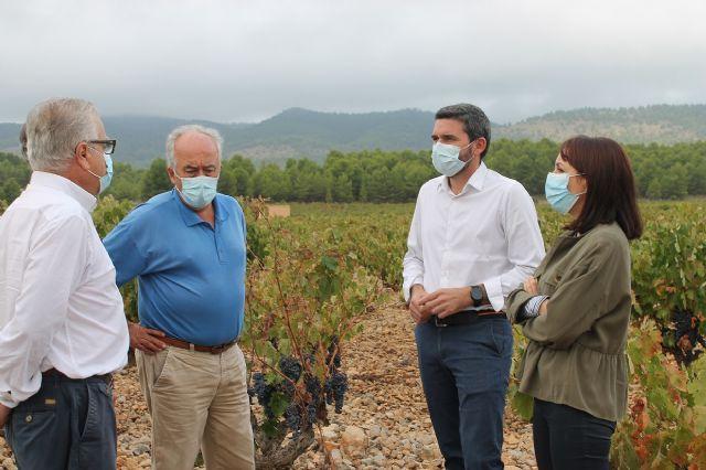 Visita para conocer los daños que las fuertes lluvias han causado en viñedos de la DOP Bullas - 2, Foto 2