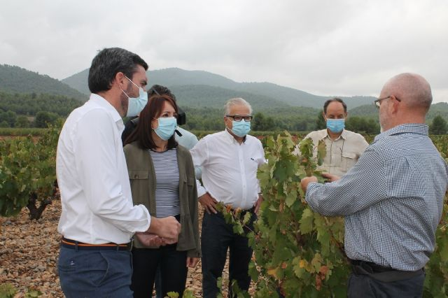 Visita para conocer los daños que las fuertes lluvias han causado en viñedos de la DOP Bullas - 3, Foto 3