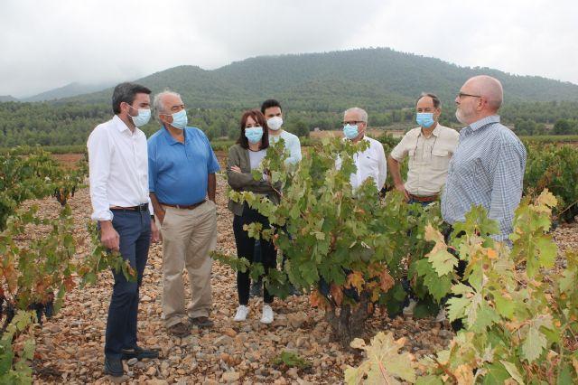 Visita para conocer los daños que las fuertes lluvias han causado en viñedos de la DOP Bullas - 4, Foto 4