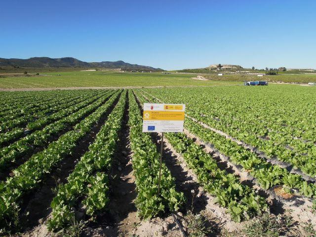 GO-ACBD, elegido como ejemplo de innovación para la producción agrícola europea - 2, Foto 2