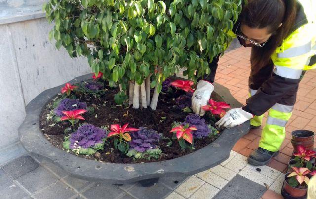 Los jardines de pedanías se llenan de colores en Navidad con más de 9.000 flores - 1, Foto 1
