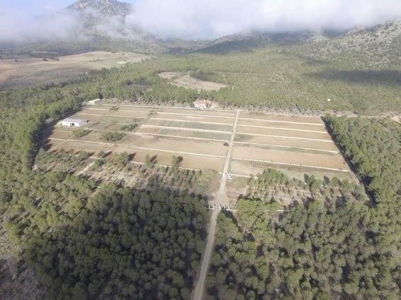 Agricultura finaliza las mejoras de los sistemas forestales del monte público ´El Bebedor´ en Moratalla - 1, Foto 1