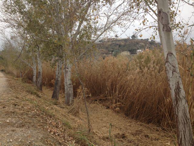 Mantenimiento y restauración del río Segura Tramo Ojós-La Contraparada - 1, Foto 1