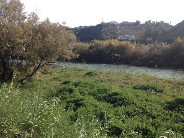 Mantenimiento y restauración del río Segura Tramo Ojós-La Contraparada - 2, Foto 2