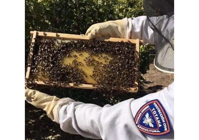 [La Unidad de Apicultura de Protección Civil de Totana activa el dispositivo de recogida de enjambres de abejas coincidiendo con la floración primaveral
