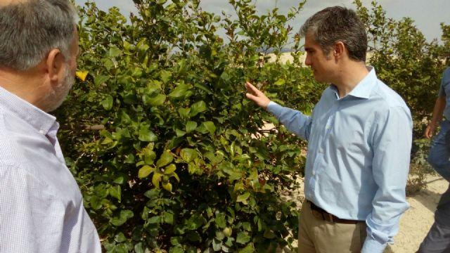 Agricultura estudiará el proyecto de modernización de regadíos de la comunidad El Porvenir de Abanilla - 2, Foto 2