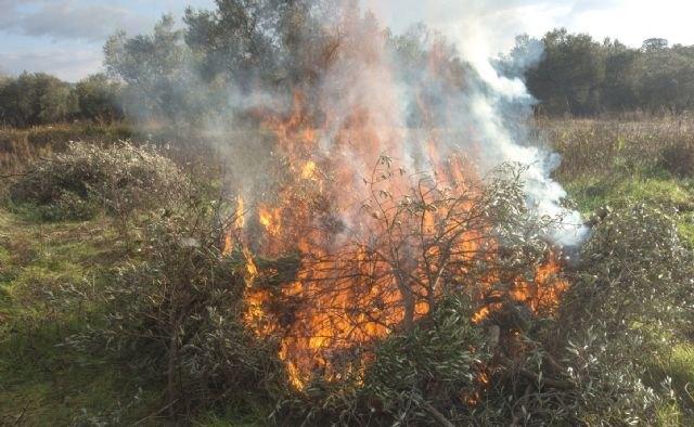 La Comunidad Autónoma prorroga la prohibición de quemas agrícolas de restos vegetales procedentes de poda hasta después del verano - 1, Foto 1
