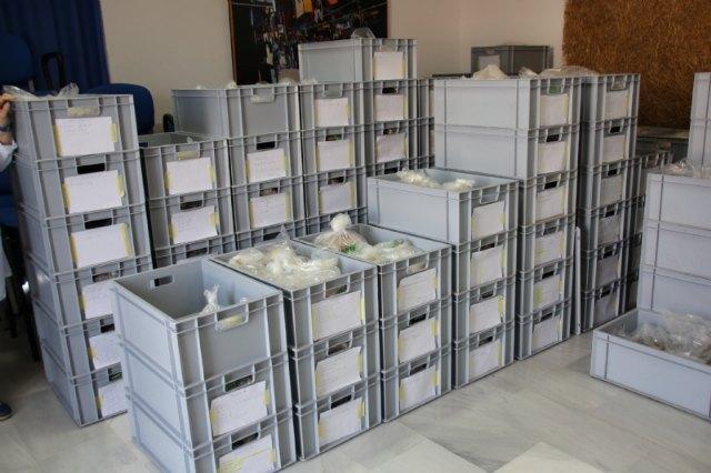 Finaliza el proyecto de ordenación de materiales arqueológicos con la clasificación de unas 10.000 piezas, Foto 3