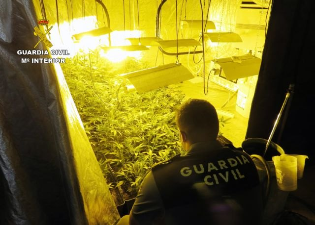The Civil Guard detains a neighbor from Totana who was hiding a marijuana plantation in a used car buying and selling establishment, Foto 1