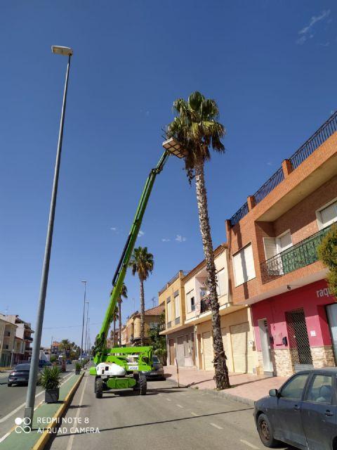 El Ayuntamiento lleva a cabo labores de tala y fumigación en las palmeras del municipio - 2, Foto 2
