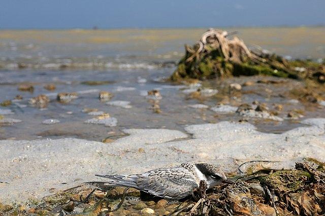 Catástrofe ambiental y social en el Mar Menor - 2, Foto 2