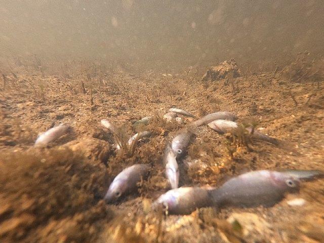 Catástrofe ambiental y social en el Mar Menor - 5, Foto 5