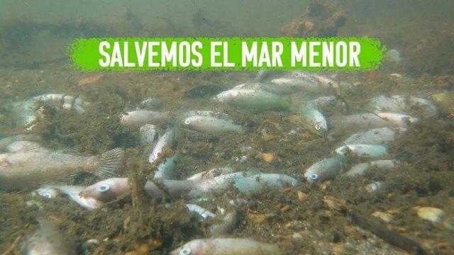 Catástrofe ambiental y social en el Mar Menor - 1, Foto 1