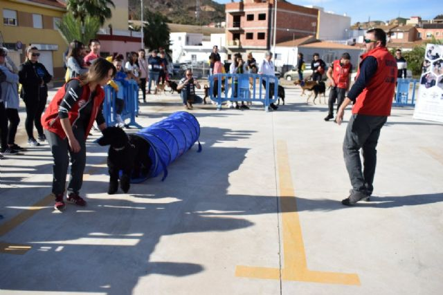 Un centenar de dueños con sus perros participan en la II marcha Por ellos de APROAMA - 4, Foto 4
