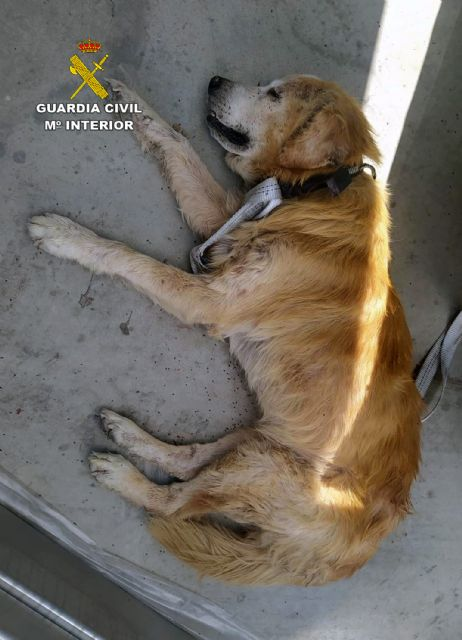 La Guardia Civil investiga a dos personas por abandonar a un perro enfermo en un polígono industrial de Cieza - 1, Foto 1