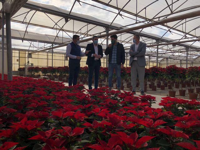 La Comunidad anima a comprar flor de pascua para ayudar al sector de la flor cortada y ornamental durante la campaña de Navidad - 1, Foto 1