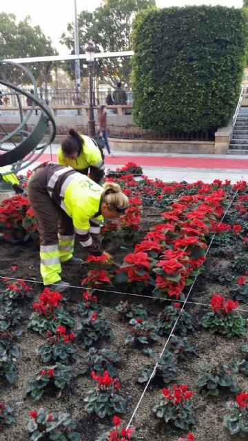 Unas 5.000 flores de Pascua adornan las principales calles de Murcia con motivo de las fiestas navideñas - 1, Foto 1