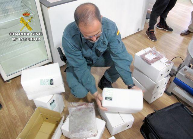 La Guardia Civil desmantela un  criadero  ilegal de tortugas con cerca de un centenar especies - 1, Foto 1
