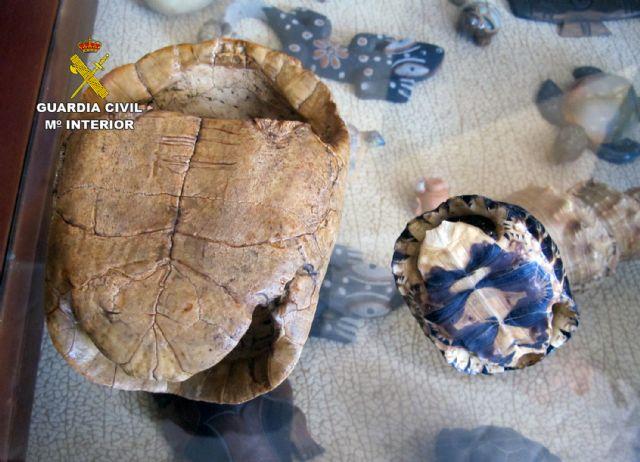 La Guardia Civil desmantela un  criadero  ilegal de tortugas con cerca de un centenar especies - 5, Foto 5