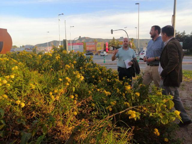 El Plan Hiedra llega al Barrio del Infante - 1, Foto 1