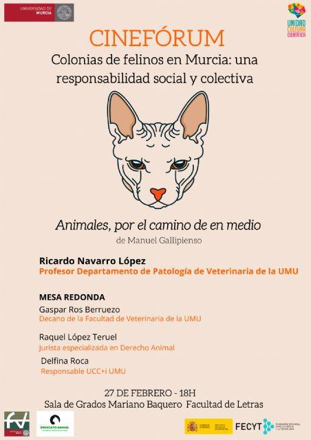 La UMU reflexiona sobre las colonias de felinos en Murcia - 1, Foto 1