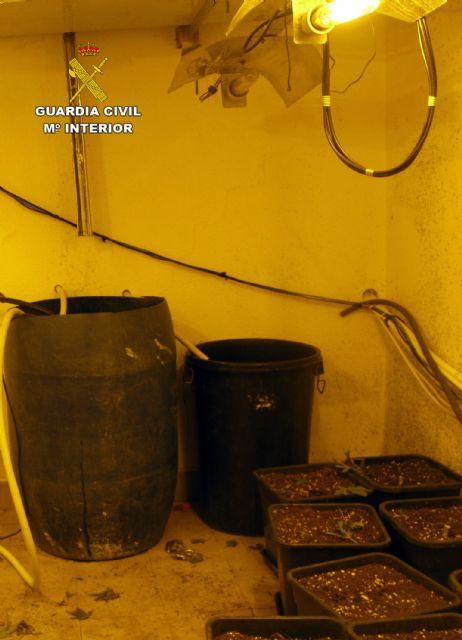 La Guardia Civil desmantela en una casa de campo de Librilla un invernadero intensivo con cerca de 200 plantas de marihuana - 2, Foto 2