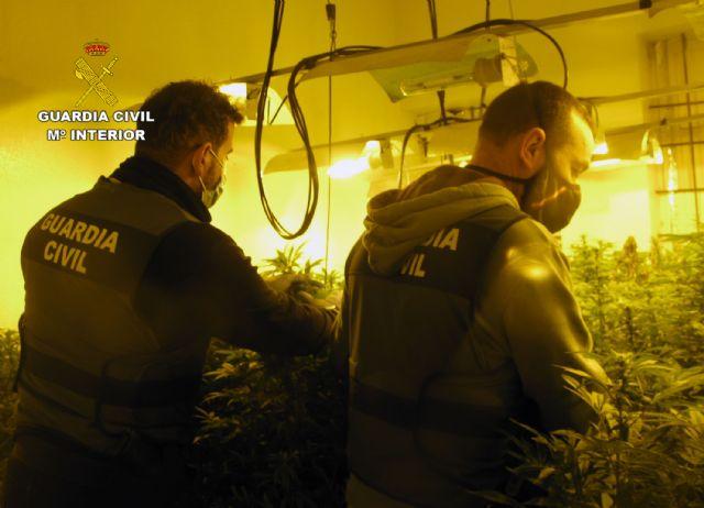 La Guardia Civil desmantela en una casa de campo de Librilla un invernadero intensivo con cerca de 200 plantas de marihuana - 5, Foto 5