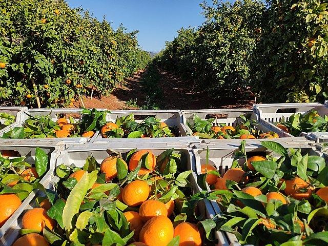 """FruitVegetablesEUROPE y la UE lanzan la campaña """"CuTE-4 You"""", un homenaje al trabajo esencial de los productores de frutas y hortalizas durante la pandemia - 2, Foto 2"""