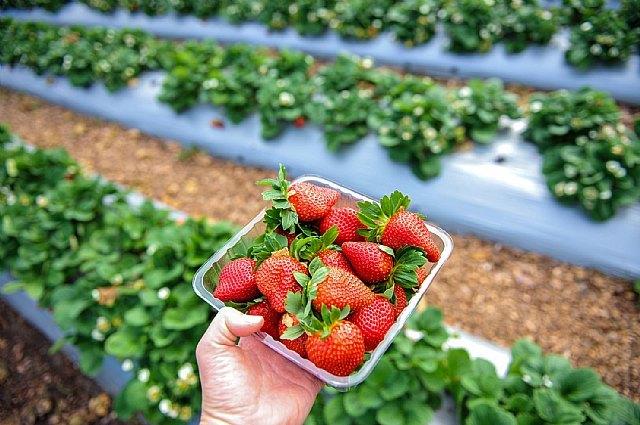 """FruitVegetablesEUROPE y la UE lanzan la campaña """"CuTE-4 You"""", un homenaje al trabajo esencial de los productores de frutas y hortalizas durante la pandemia - 3, Foto 3"""