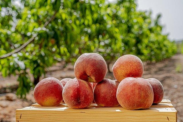 """FruitVegetablesEUROPE y la UE lanzan la campaña """"CuTE-4 You"""", un homenaje al trabajo esencial de los productores de frutas y hortalizas durante la pandemia - 4, Foto 4"""