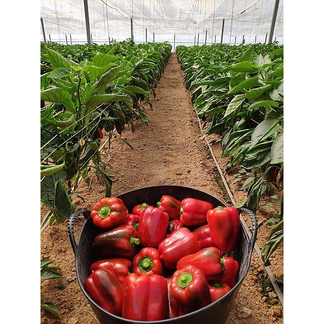 """FruitVegetablesEUROPE y la UE lanzan la campaña """"CuTE-4 You"""", un homenaje al trabajo esencial de los productores de frutas y hortalizas durante la pandemia - 5, Foto 5"""
