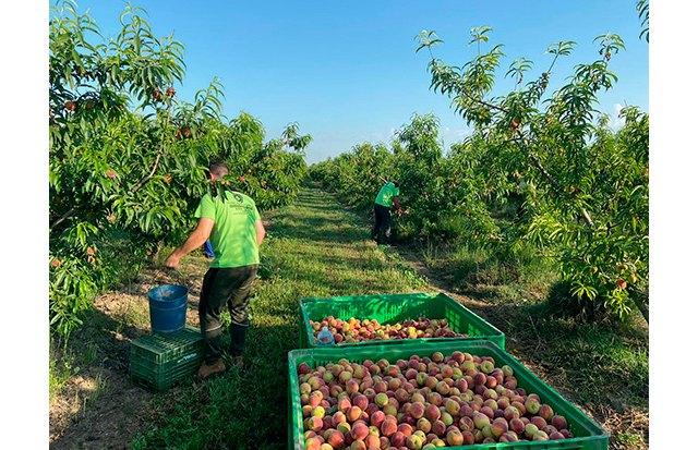 """UPA pide el fin del """"maltrato a la fruta"""" por parte de algunas cadenas de la distribución - 1, Foto 1"""