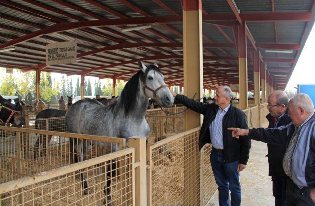 Inaugurada la Feria de Ganado Equino de Puerto Lumbreras 2016 - 1, Foto 1