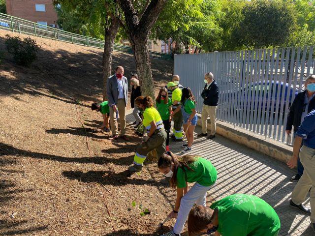 El Plan Hiedra crea perímetros verdes en los parques y jardines y fomenta la concienciación medioambiental - 2, Foto 2