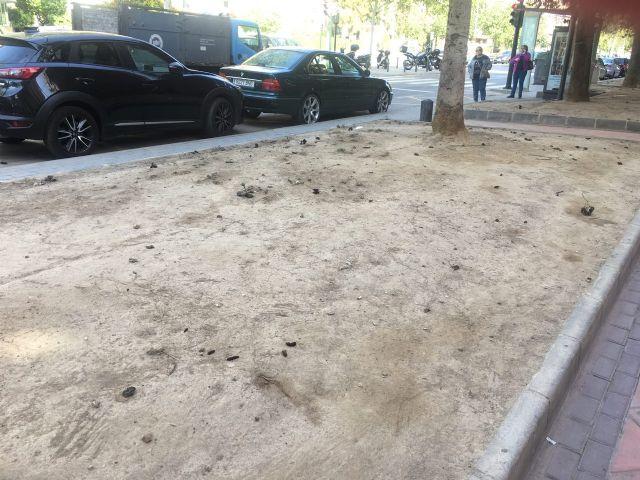 Ahora Murcia pedirá en el pleno la revegetación y habilitación de zonas verdes en espacios urbanos marginales - 1, Foto 1