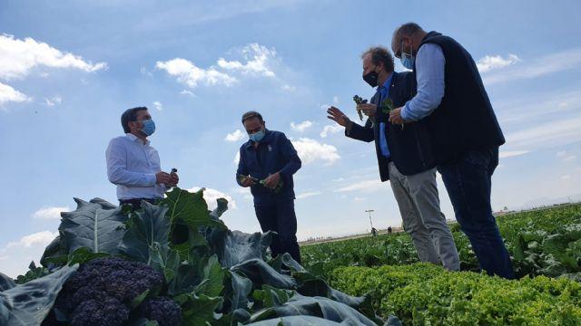 El consejero de Agricultura destaca la producción de Redi, la nueva hortaliza del Campo de Cartagena - 1, Foto 1