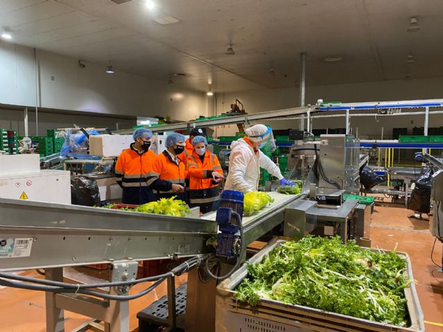 Agromediterránea exporta desde la Región de Murcia hortalizas frescas a 25 países de toda Europa - 3, Foto 3
