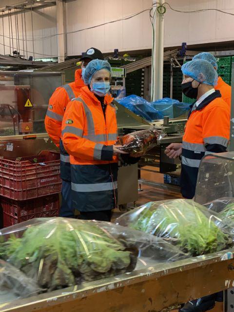 Agromediterránea exporta desde la Región de Murcia hortalizas frescas a 25 países de toda Europa - 4, Foto 4