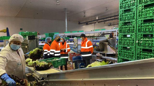 Agromediterránea exporta desde la Región de Murcia hortalizas frescas a 25 países de toda Europa - 5, Foto 5