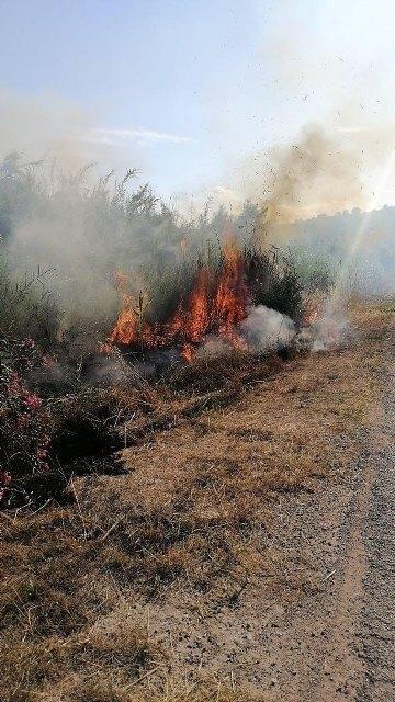 Conato el incendio de cañas en zona del río Argos (Calasparra) - 2, Foto 2