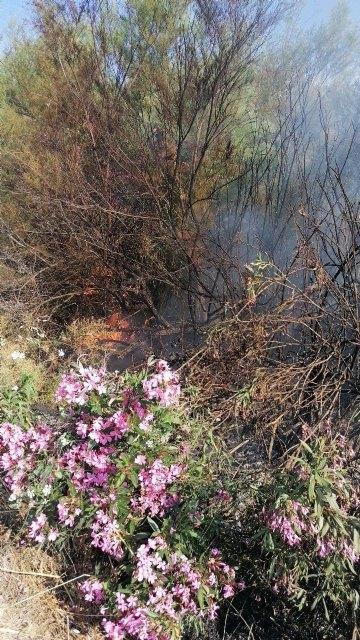 Conato el incendio de cañas en zona del río Argos (Calasparra) - 3, Foto 3