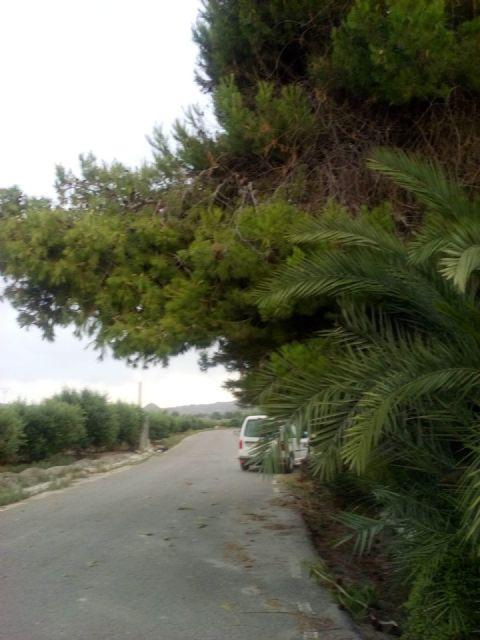 El PP respalda la petición de los vecinos de La Torrecilla para mejorar los caminos Viejo del Puerto, Azagaor, Cabalgadores, Velopache y Alcolea - 4, Foto 4