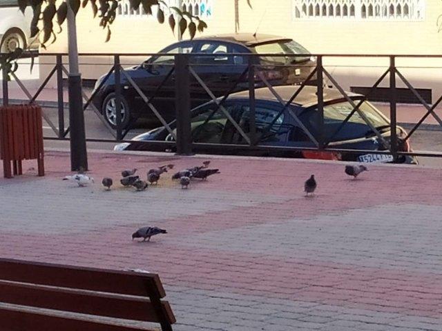 Saorín recuerda que está prohibido dar comida a los animales callejeros - 1, Foto 1