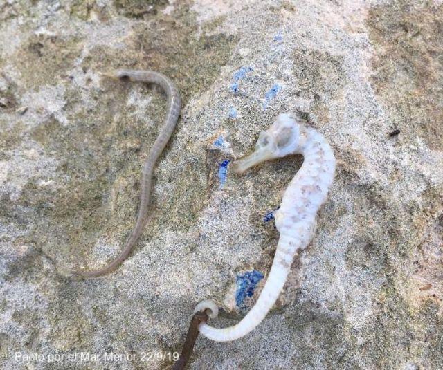 Pérdida de especies en el Mar Menor y otras alteraciones - 1, Foto 1