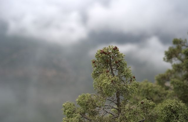 La Tabla el capricho de Sierra Espuña, Foto 2
