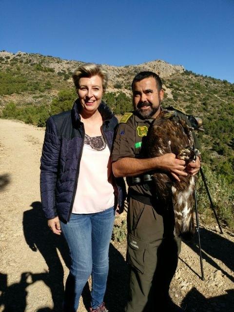 La Comunidad recupera un águila real herida por un disparo y la libera en el Parque Regional de Sierra Espuña, Foto 1