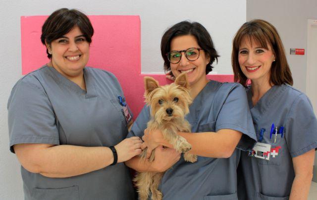 El Hospital Veterinario UMU consigue dar una segunda oportunidad a un perro con síndrome de Chiari - 1, Foto 1